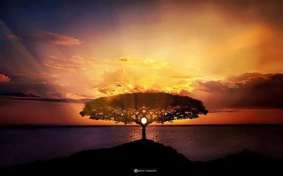 sunrise behind tree